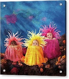 Sea Anemones  Acrylic Print by Anne Geddes