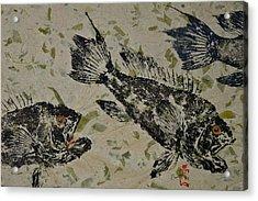 Sea Bass School On Olive Mango Paper  Acrylic Print