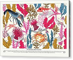 Sea Bed Annotated Acrylic Print by Jacqueline Colley