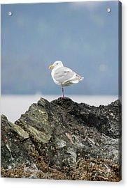 Sea Bird Perched On A Rock Acrylic Print