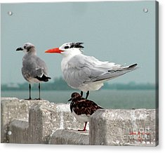 Acrylic Print featuring the photograph Sea Birds by Donna Brown