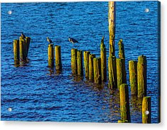 Sea Birds On Old Pier Posts Acrylic Print