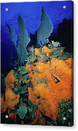 Sea Fan Collage Acrylic Print