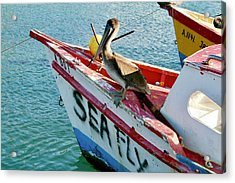 Sea Fly 1, Aruba Acrylic Print