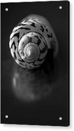 Sea Gem In Black And White Acrylic Print by Maggie Terlecki
