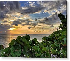 Sea Grape Sunrise Acrylic Print
