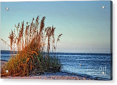 Sea Grass View Acrylic Print by Gina Cormier
