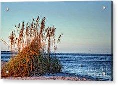 Sea Grass View Acrylic Print