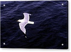 Acrylic Print featuring the photograph Sea Gull Over Water Dbwc by Lyle Crump