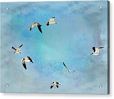 Acrylic Print featuring the photograph Sea Gulls In Flight by Athala Carole Bruckner