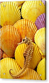Sea Horse And Sea Shells Acrylic Print by Garry Gay