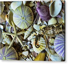 Sea Horse And Sea Star Acrylic Print by Paul Ward