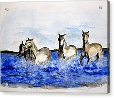 Sea Horses Acrylic Print