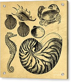 Acrylic Print featuring the drawing Sea Life Vintage Illustrations by Edward Fielding
