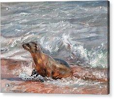 Sea Lion Acrylic Print by David Stribbling