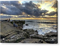 Acrylic Print featuring the photograph Sea Lions At Sunset by Eddie Yerkish