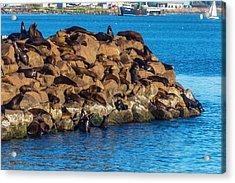 Sea Lions Sunning On Rocks Acrylic Print by Garry Gay