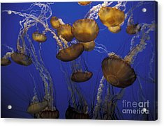 Sea Nettels Acrylic Print by Stan and Anne Foster