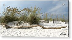 Sea Oats And Driftwood Acrylic Print by Dennis Stein