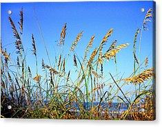 Sea Oats And Sea Acrylic Print by Thomas R Fletcher