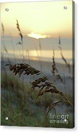 Sea Oats At Sunrise Acrylic Print
