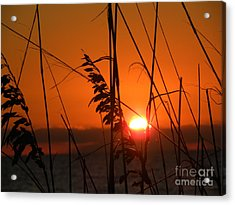 Sea Oats At Sunset Acrylic Print by Terri Mills