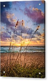 Sea Oats Acrylic Print by Debra and Dave Vanderlaan