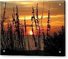 Sea Oats In The Sun Acrylic Print