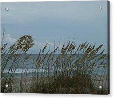 Sea Oats On Wrightsville Beach Acrylic Print