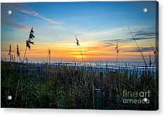 Sea Oats Sunrise Acrylic Print