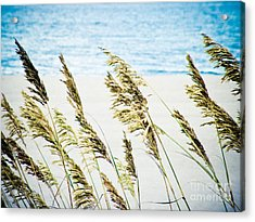 Sea Oats Acrylic Print by Tonya Laker
