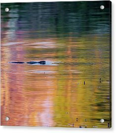 Sea Of Color Square Acrylic Print by Bill Wakeley