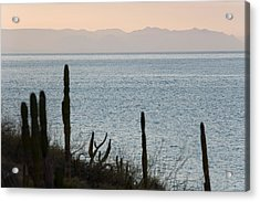 Sea Of Cortez Acrylic Print by Richard Steinberger