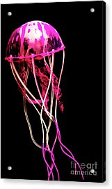 Sea Of Mystery Acrylic Print