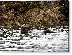 Sea Otter Floating In The Bay Acrylic Print