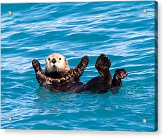 Acrylic Print featuring the photograph Sea Otter by Phil Stone