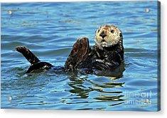 Sea Otter Primping Acrylic Print