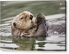 Sea Otter Profile Acrylic Print by Tim Grams