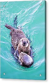 Sea Otter Pup Acrylic Print