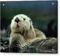 Sea Otter  Acrylic Print by Tim Fitzharris