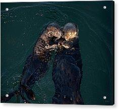 Sea Otters II Color Acrylic Print