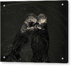 Sea Otters II Toned Acrylic Print by David Gordon
