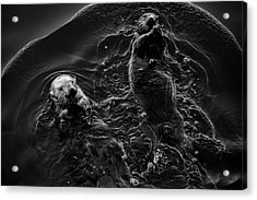 Acrylic Print featuring the photograph Sea Otters Iv Bw by David Gordon
