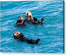 Acrylic Print featuring the photograph Sea Otters by Phil Stone