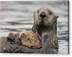 Sea Otters Acrylic Print by Tim Grams
