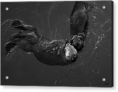 Acrylic Print featuring the photograph Sea Otters V Bw by David Gordon