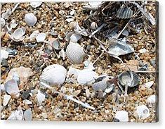 Sea Ribbons And Shells Acrylic Print by Marcie Daniels