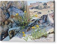 Sea Rock Posies Acrylic Print by Karol Wyckoff