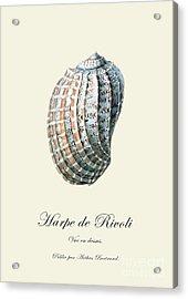 Sea Shell Acrylic Print by Patruschka Hetterschij