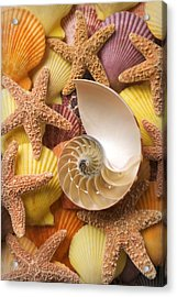 Sea Shells And Starfish Acrylic Print by Garry Gay